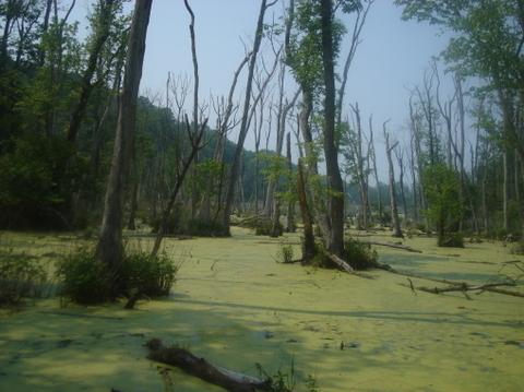 Swamp_ii_2
